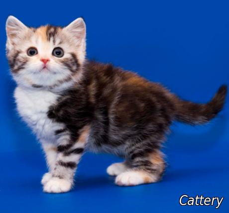 top 10 cats names